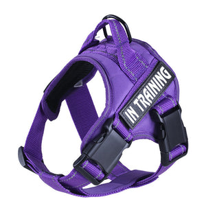 In Training No Pull Dog Harness - Supreme Paw Supply