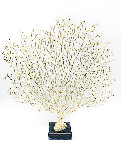 Contrast Inc Medium Gold Sea Fan
