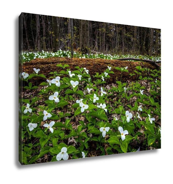 Gallery Wrapped Canvas, Moss Covered Log And Wild White Trillium Fallen Log Surrounded By Wild White - melangebyojo