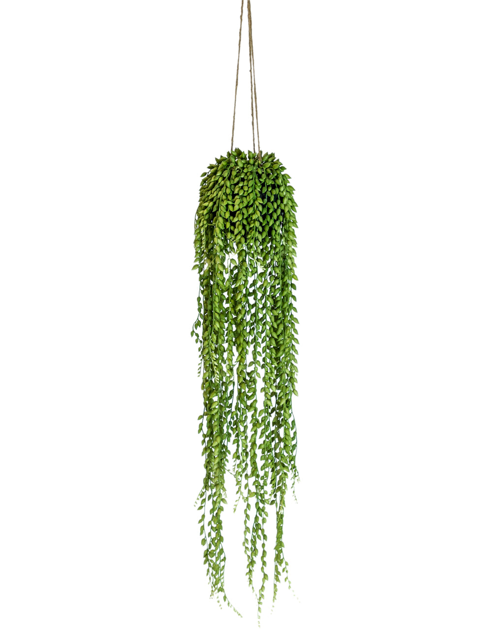 Artificial Trailing String of Pearls Plant
