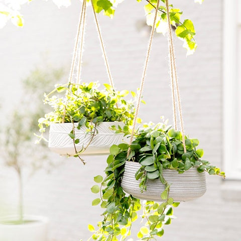 White Etched Hanging Concrete Clay Fibre Planter