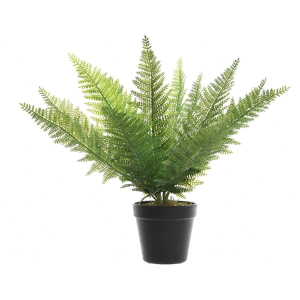 Large Green Fern Plant in Pot