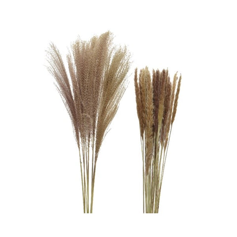 Natural Pampas Plume Bunch