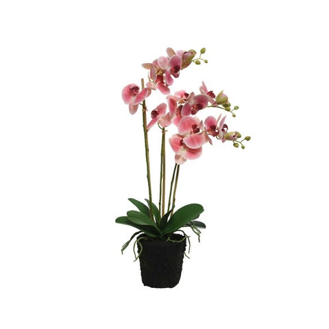 Large Pink Potted Orchid