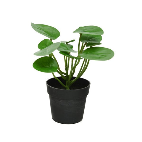 Artificial Pilea Money Plant in Pot