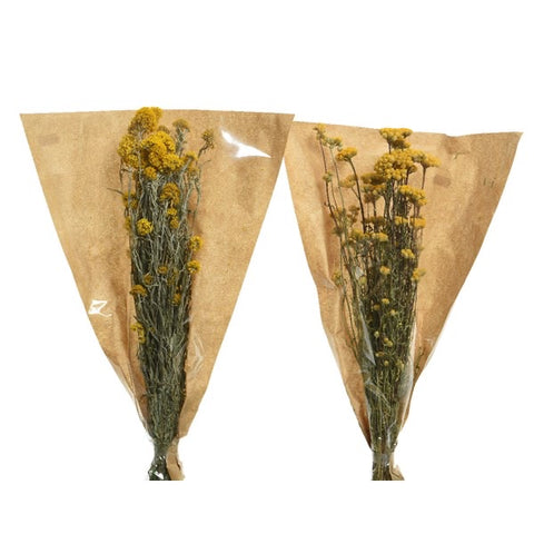 Dutch Dried Yellow Flowers