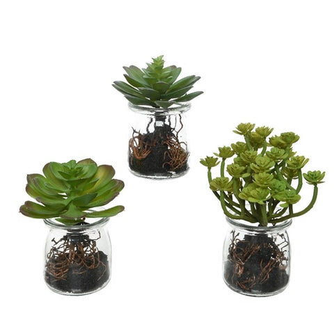 Artificial Succulent in Roots Glass Jar