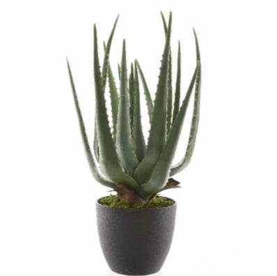 Extra Large Realistic Aloe Vera Plant in Pot
