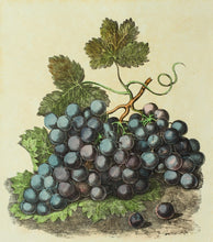 Load image into Gallery viewer, A Still Life of Grapes - Antique Lithograph circa 1830s