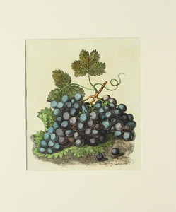 A Still Life of Grapes - Antique Lithograph circa 1830s