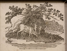 Load image into Gallery viewer, Antelope Taking Water at a Stream Wood Engraving 1790