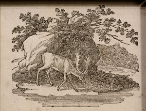 Antelope Taking Water at a Stream Wood Engraving 1790