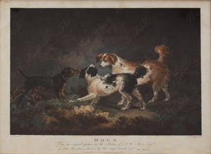 'Dogs', A Lively 18th Century Antique Stipple Engraving