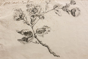 Brooch Design - Pencil Brush and Ink 18th Century
