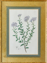 Load image into Gallery viewer, A Pair of Botanical Prints - Antique Copper Engravings, 1825/1832