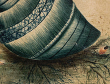 Load image into Gallery viewer, Natural Blue Salt Water Sea Snail Shell Watercolour circa 1820's