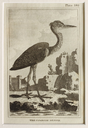 The Common Heron - Antique Copper Engraving circa 1780