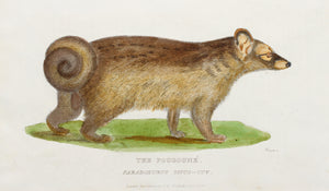 The Pougoune - Antique Copper Engraving 1825