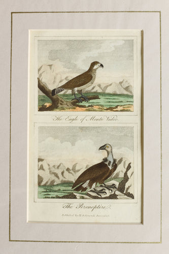 The Eagle of Monte Video and The Peronoptere - Antique Copper Engraving circa 1808