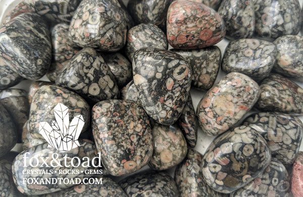 Fossil Stone Tumbled Stones
