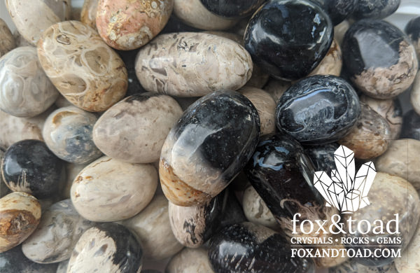 Fossil Palm Root Tumbled Stones