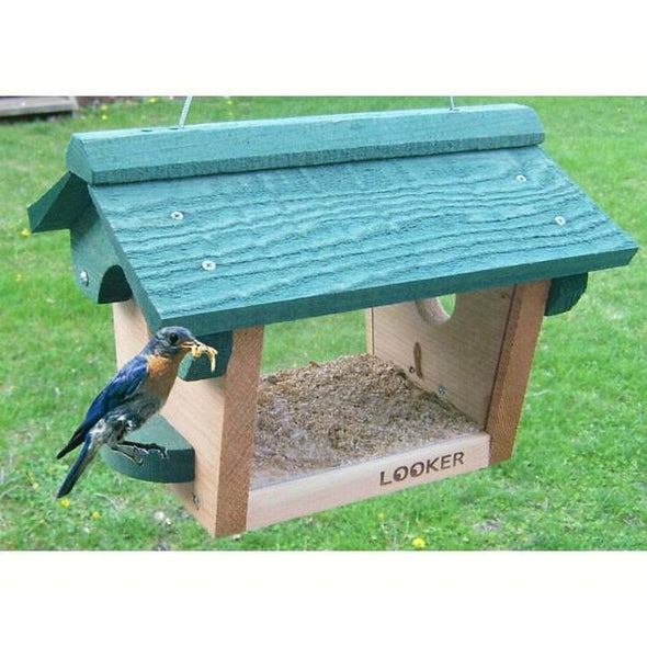 Cedar Bluebird  Feeder - lovethebirds