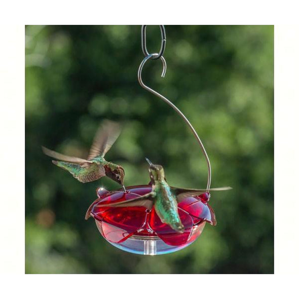 Ruby Sipper Hummingbird Feeder - lovethebirds
