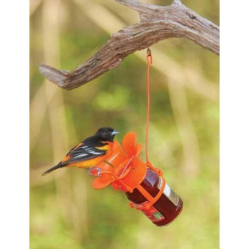 Jelly/Jam Feeder - lovethebirds