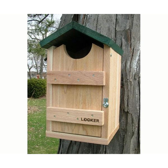 Screech Owl House-lovethebirds