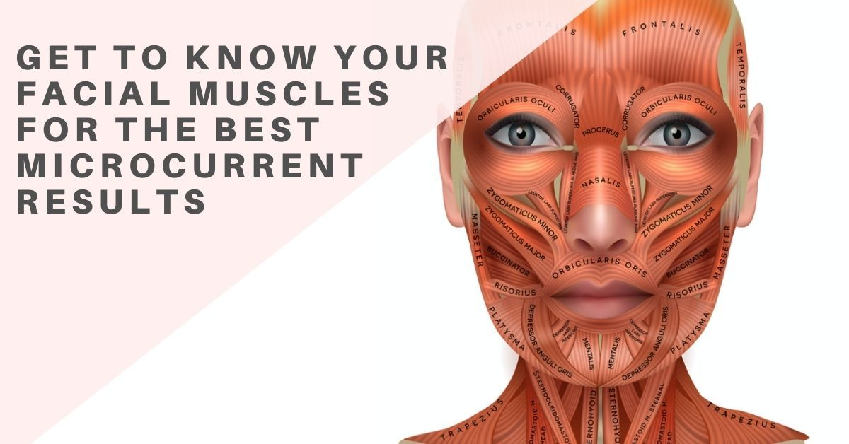 Get to Know your Facial Muscles for the Best Microcurrent Results | 7E Wellness