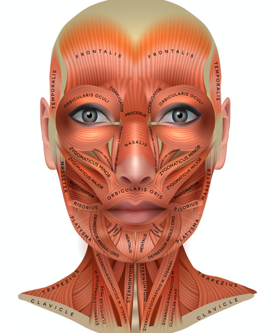 how to use microcurrent on different facial muscles