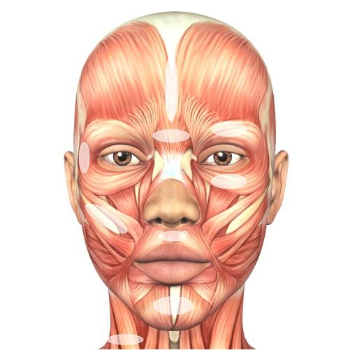 Facial Muscle Chart - 7E Wellness