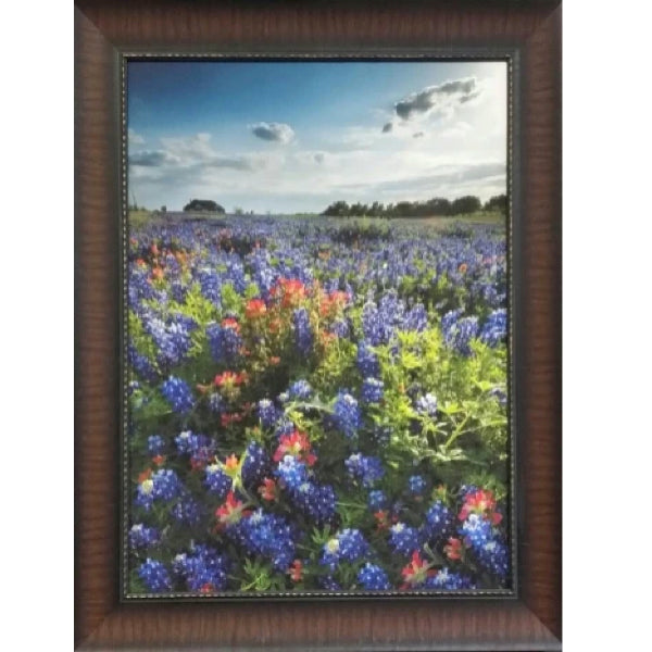 Blue Bonnet Field IV