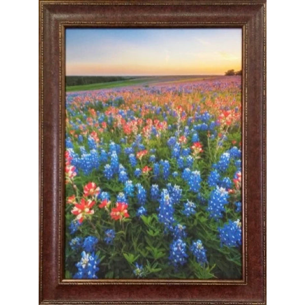 Blue Bonnet Field VIII