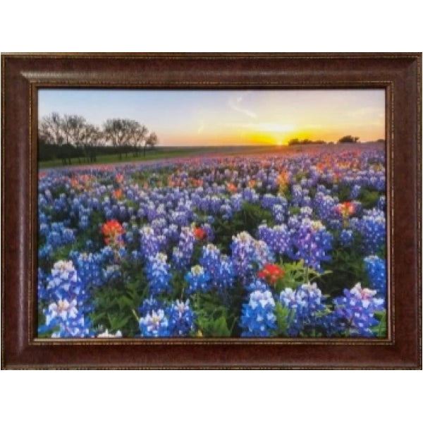 Blue Bonnet Field V