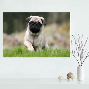 Puppy Pug Canvas Print (No Frame) (22 Selections) - Go Pugs
