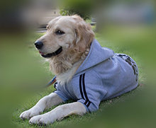 Keep your pal's behind warm with this four-legged Puppy Hoodie Sweatshirt (6 colors) - Go Pugs