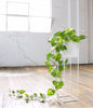 PLANTER TALL (Indoor/Outdoor) - Redfox And Wilcox