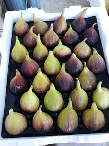 Figs - Full Tray