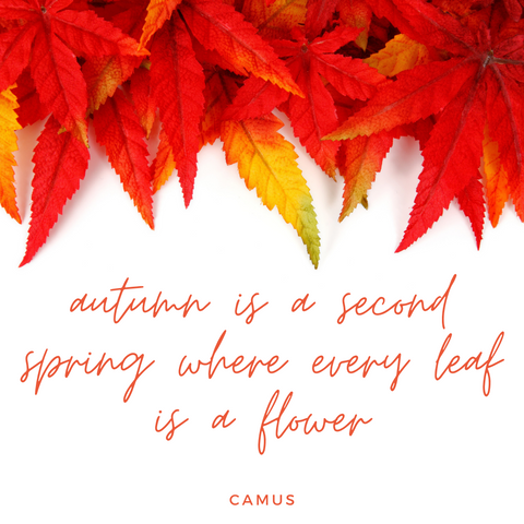 fall quote 5