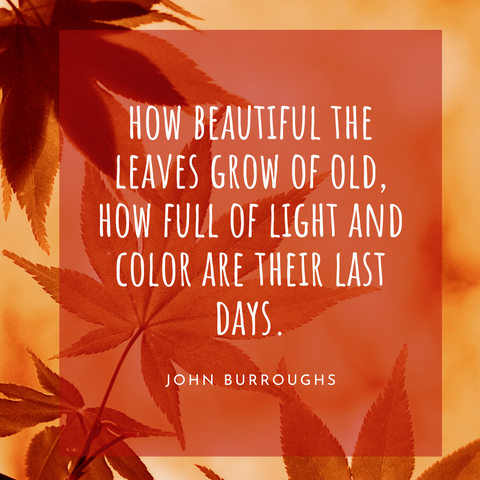 fall quote 10