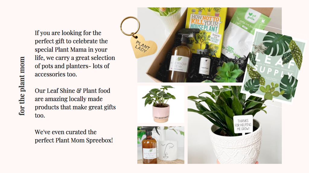 gifts for plant mama