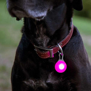 LED Dog Collar Carabiner Light
