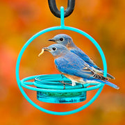 Dish Circle Bird Feeder w/Perch Aqua