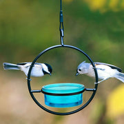 Dish Circle Bird Feeder Aqua
