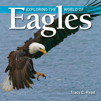 Exploring The World of Eagles