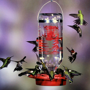 Glass Hummingbird Feeder 32 oz