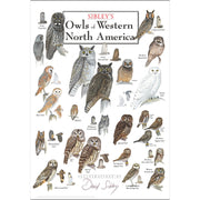 Sibleys Owls of Western North America Poster