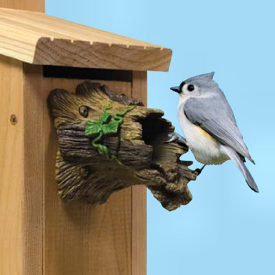 Natural Bird Guardian Bird House Protector