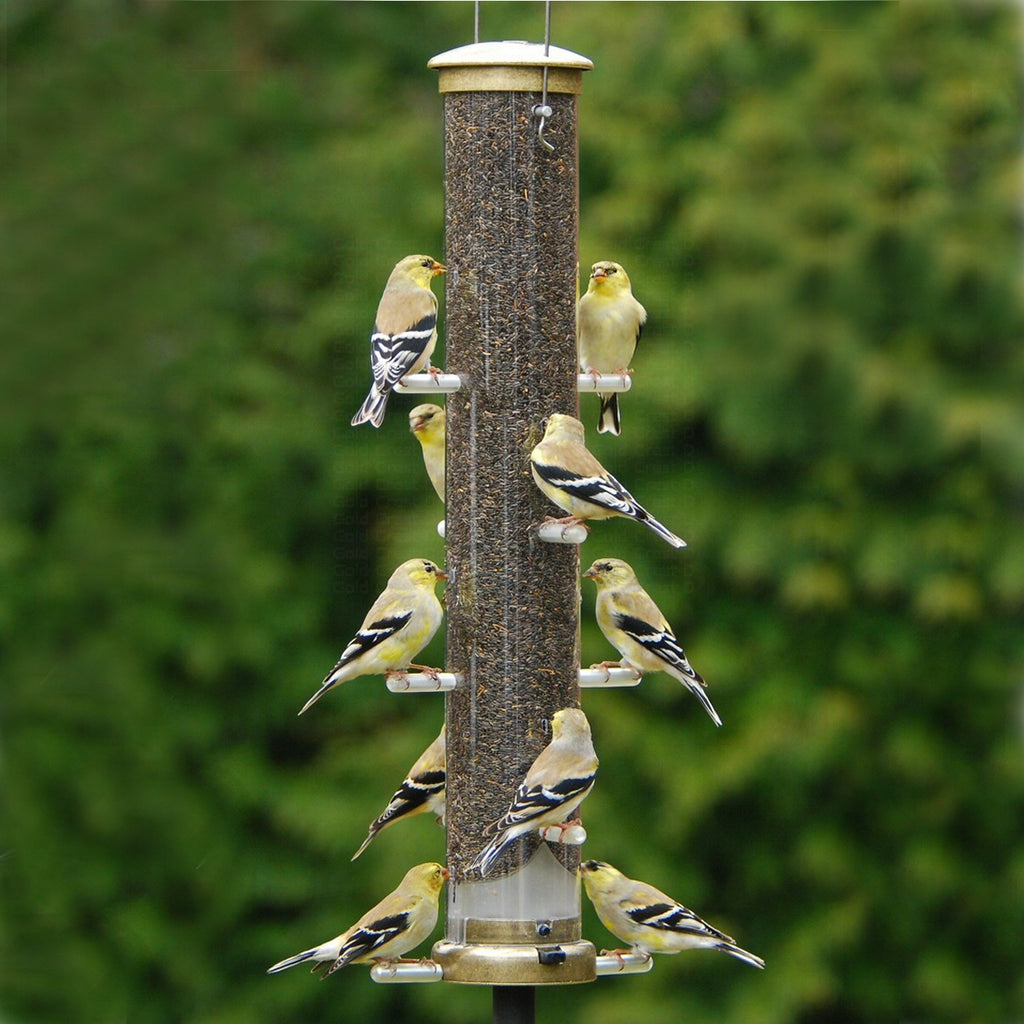 "Quick Clean Nyjer Bird Feeder - 20"" Antique Brass - Momma's Home Store"